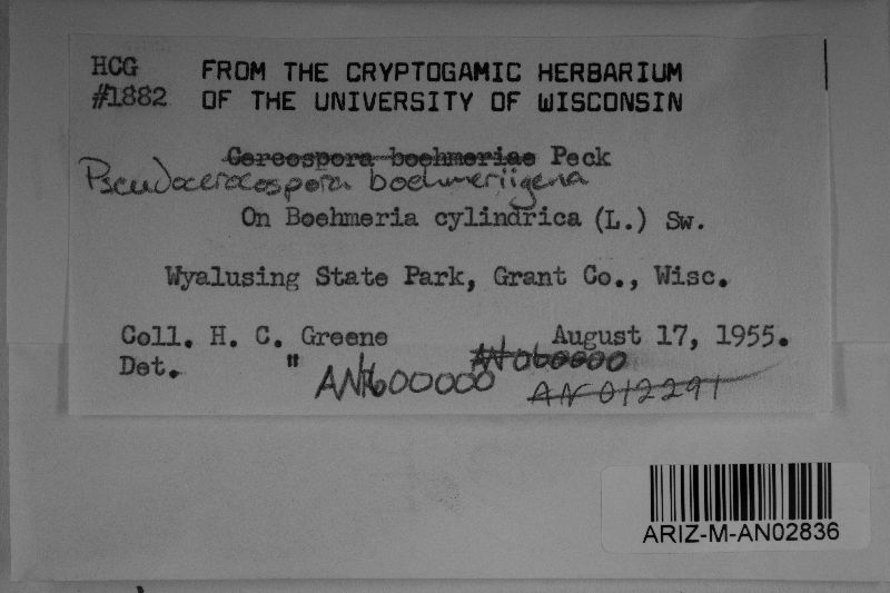 Pseudocercospora boehmeriigena image