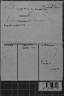 Calocera viscosa image
