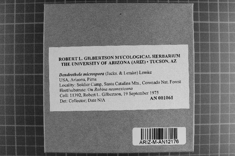 Dendrothele microspora image