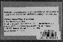 Peniophorella pallida image