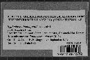 Hyphoderma budingtonii image