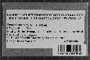 Hyphoderma setigerum image