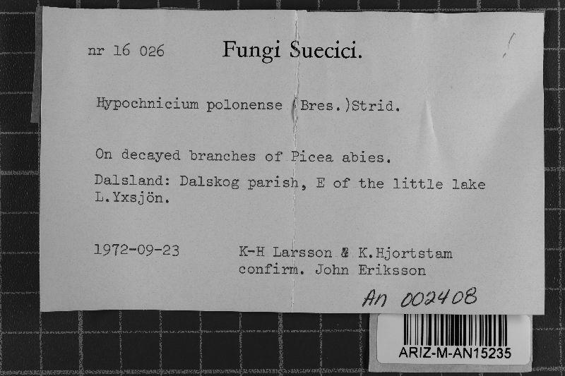 Gyrophanopsis polonensis image