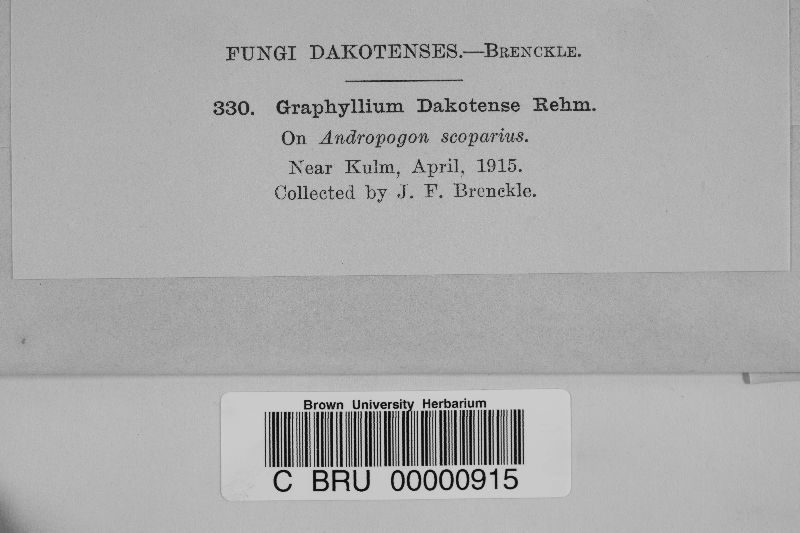 Graphyllium dakotense image
