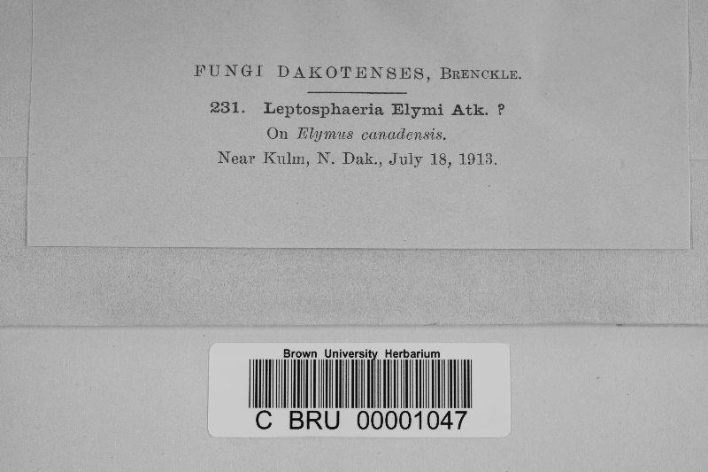 Leptosphaeria elymi image
