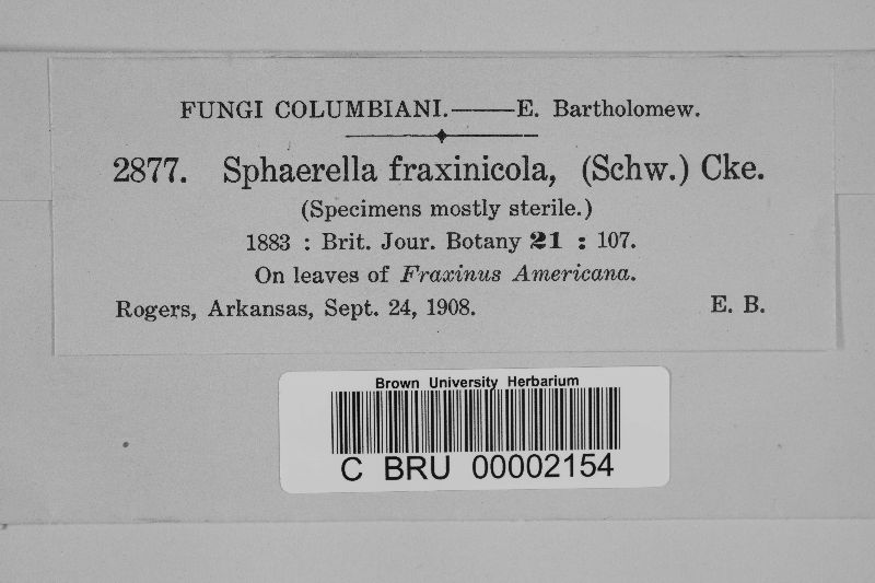 Sphaerella fraxinicola image