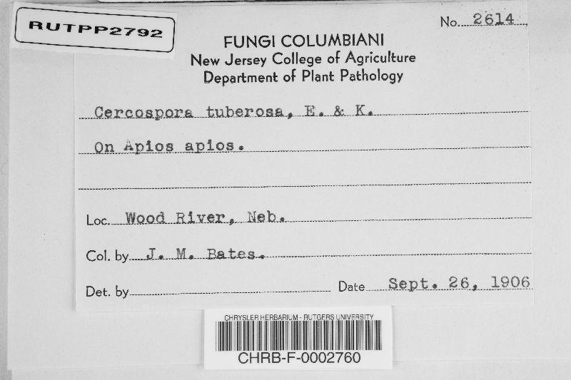 Cercospora tuberosa image