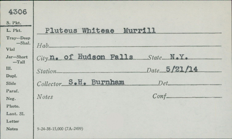 Pluteus whiteae image