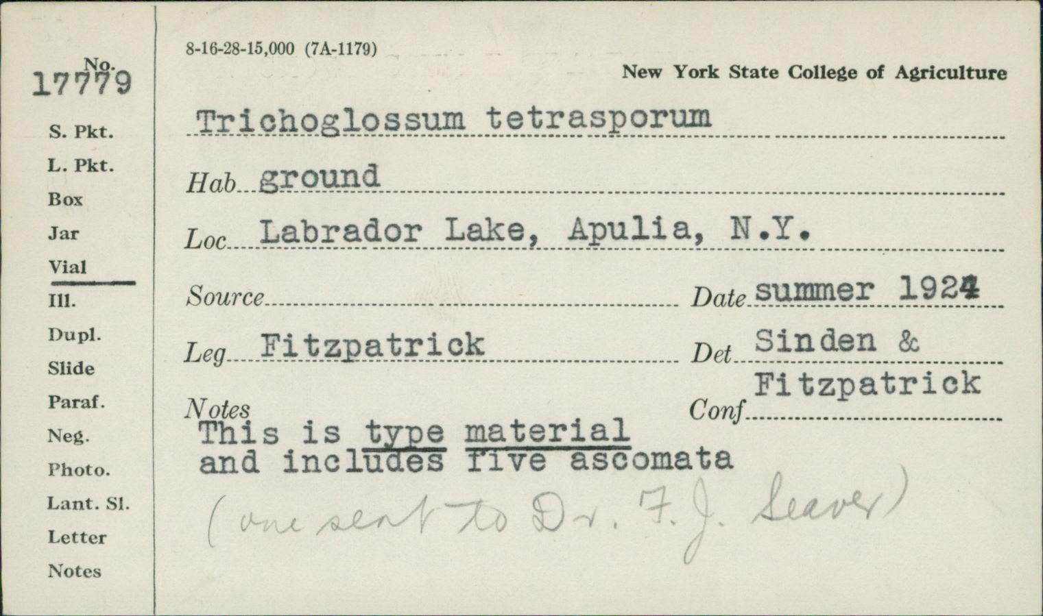 Trichoglossum tetrasporum image