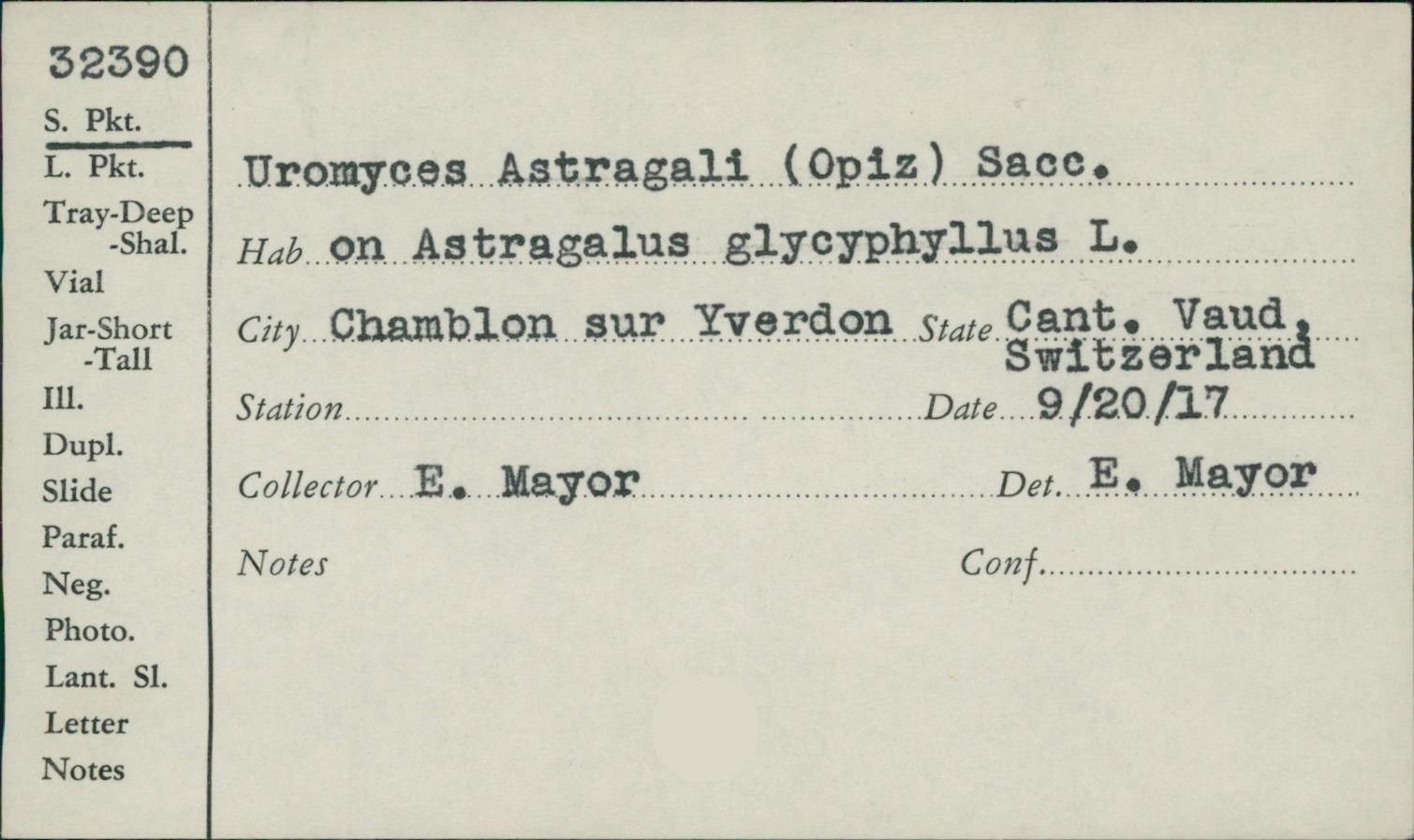 Uromyces astragali var. astragali image