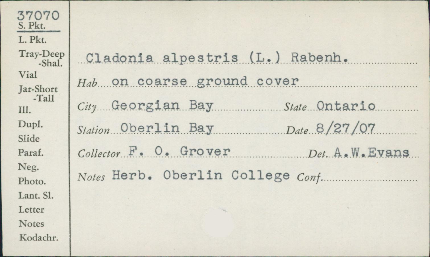 Cladonia alpestris image