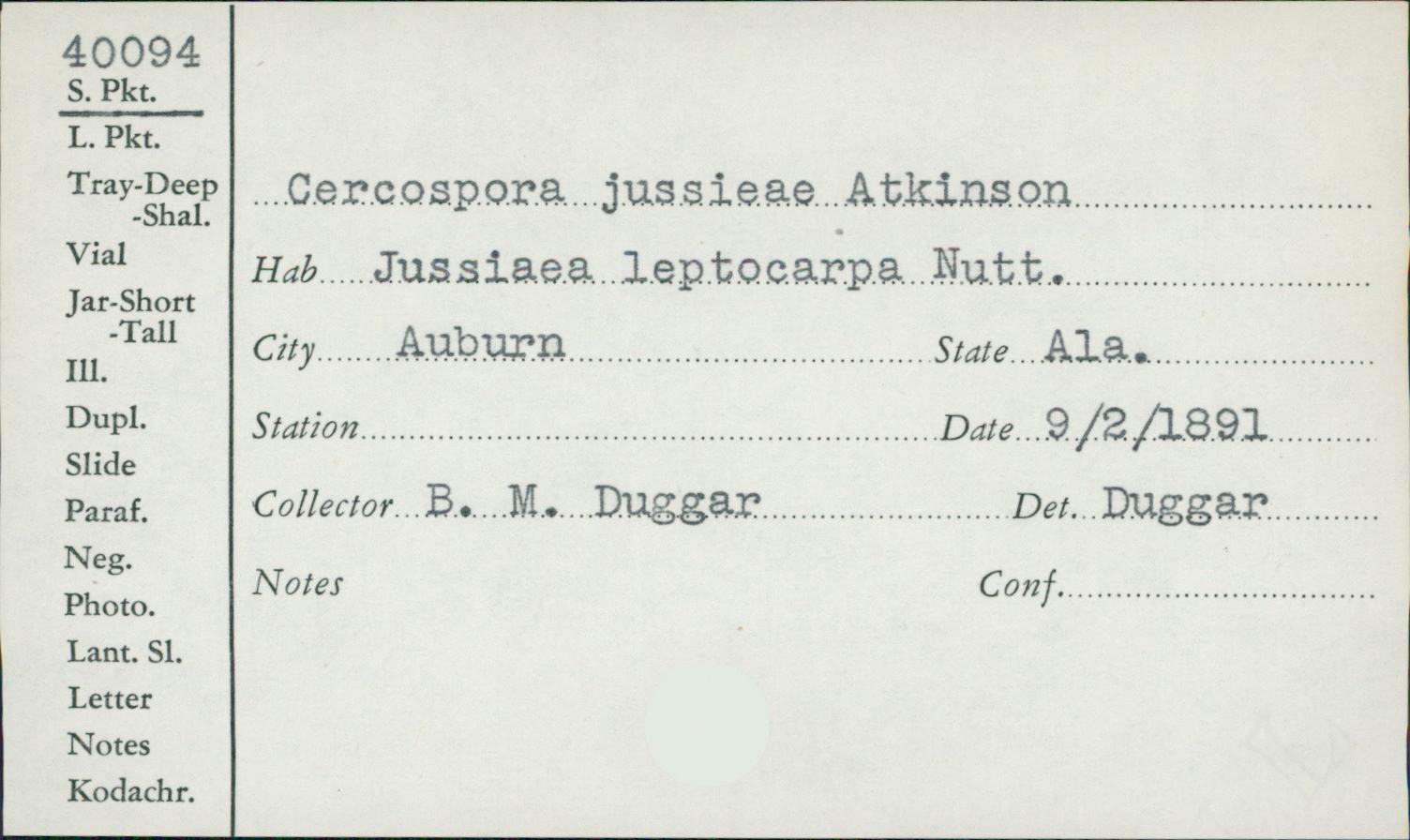 Pseudocercospora jussiaeae image