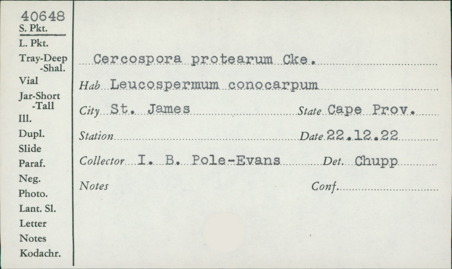 Pseudocercospora protearum image