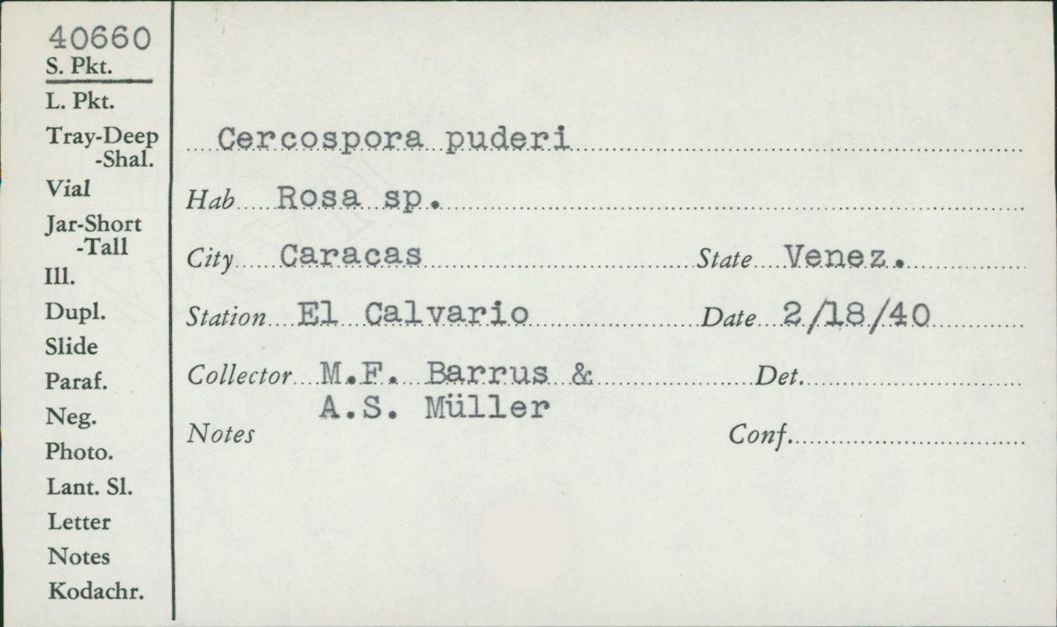 Pseudocercospora image