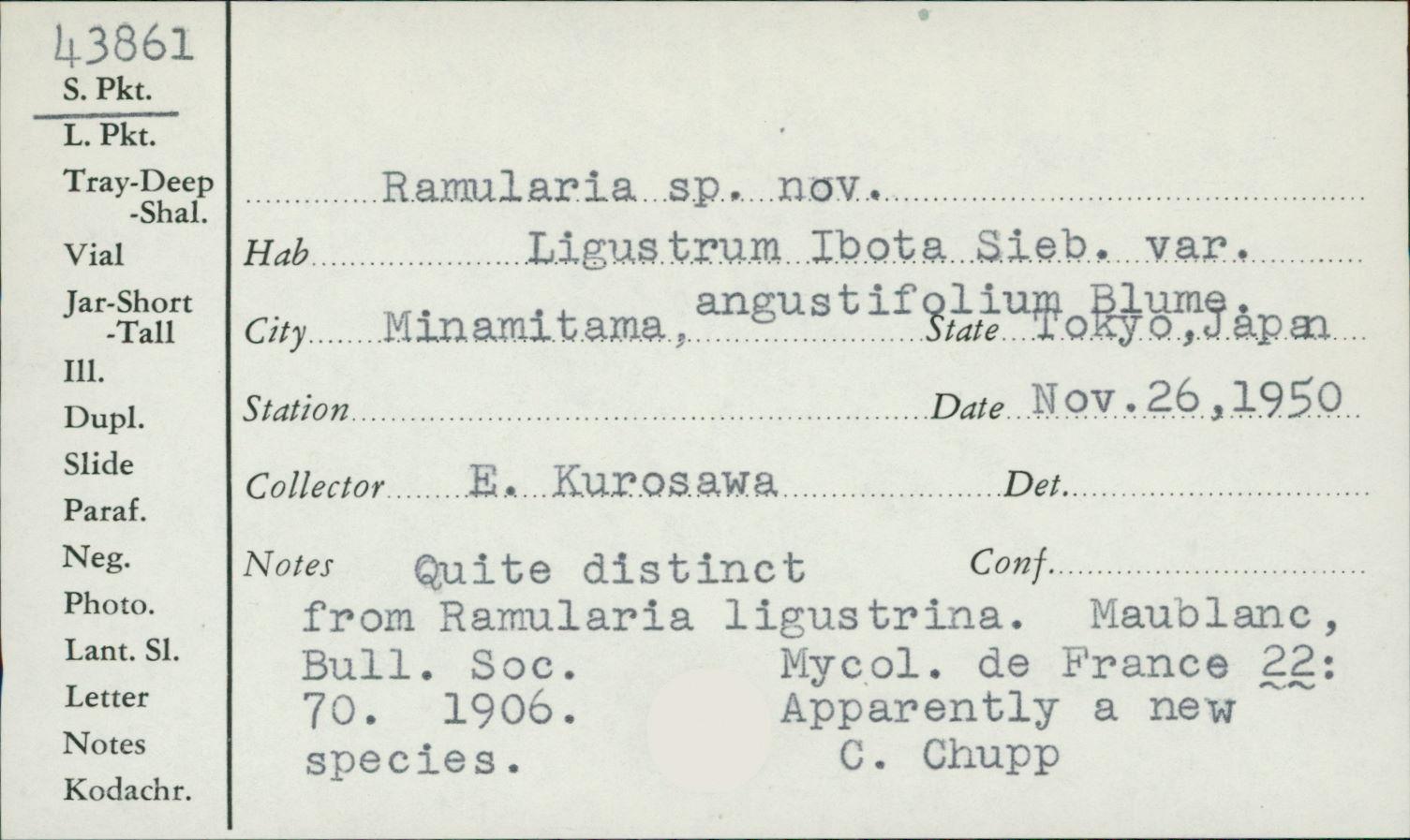 Ramularia ligustrina image