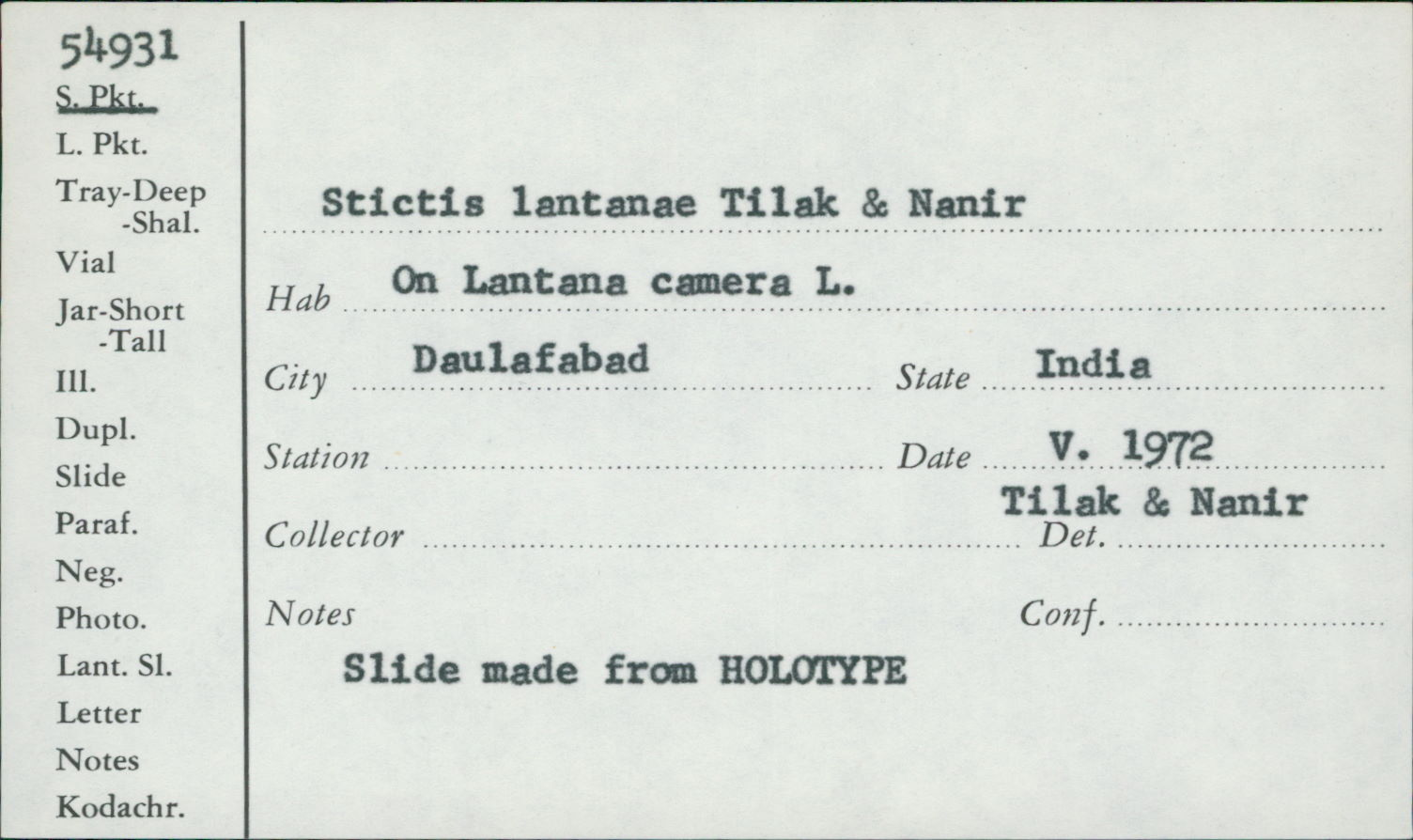 Stictis lantanae image