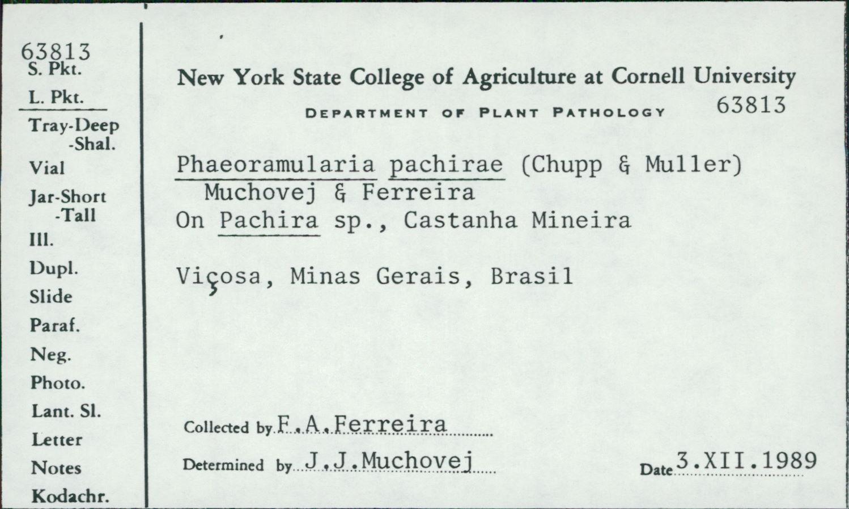 Pseudocercospora pachirae image
