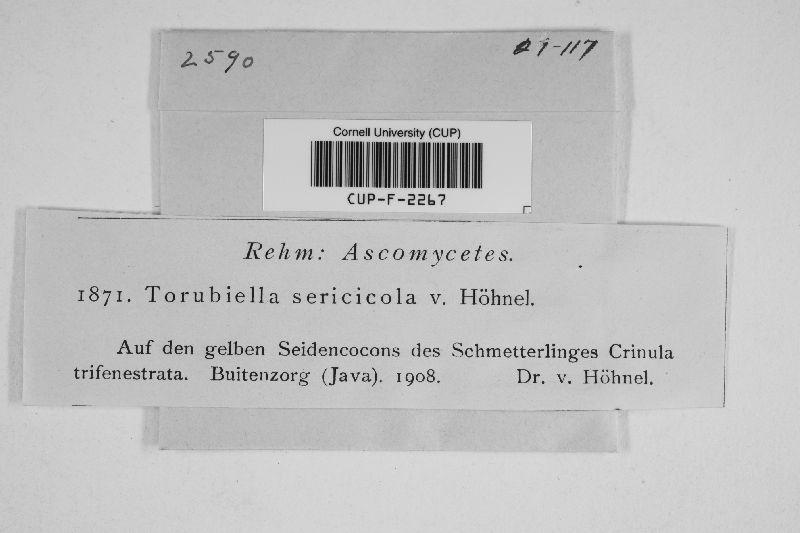 Torrubiella sericicola image