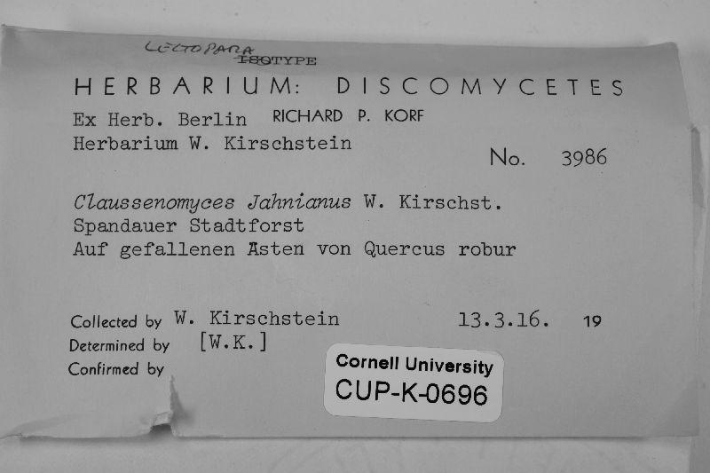 Claussenomyces jahnianus image
