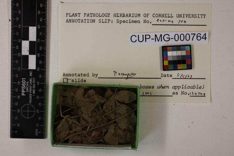 Cercospora jasminicola image