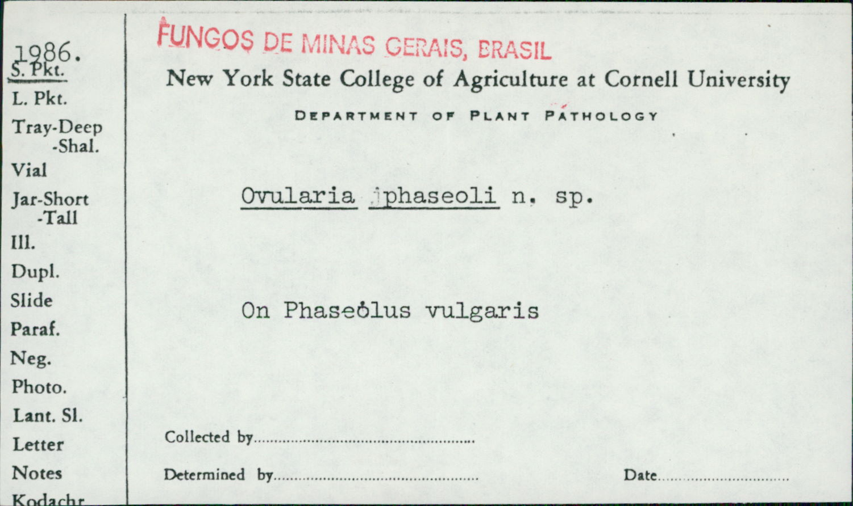 Mycovellosiella phaseoli image