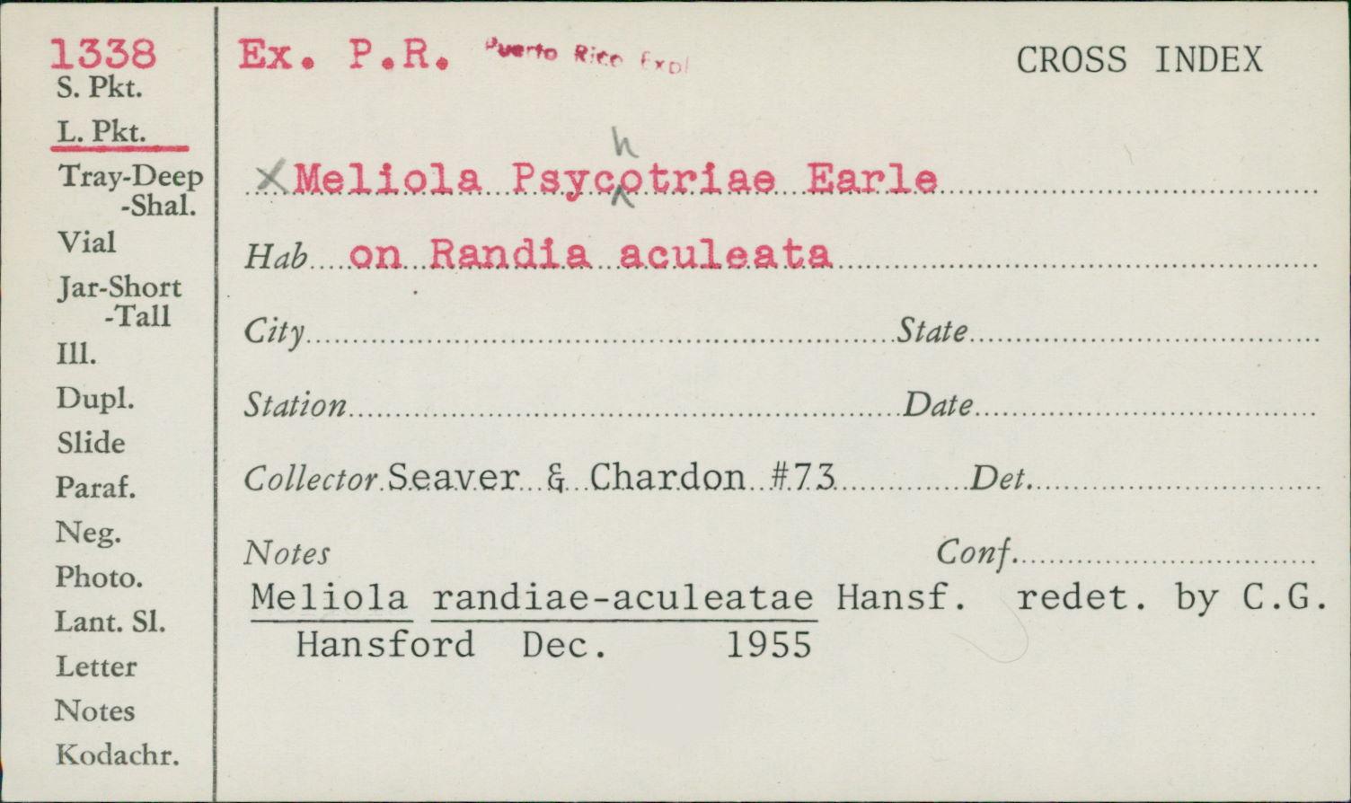 Meliola randiae-aculeatae image