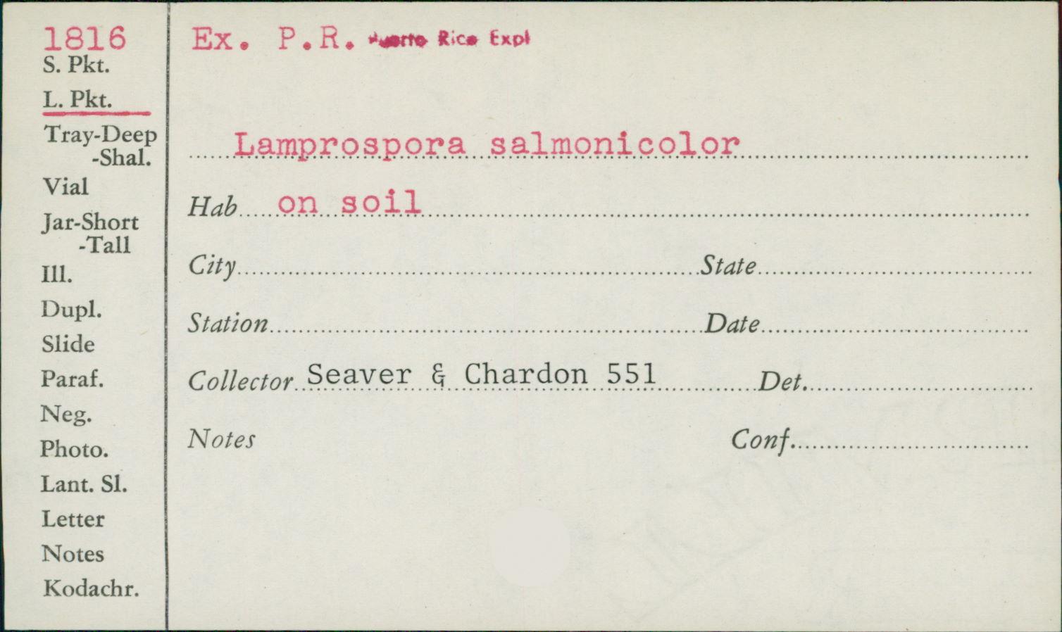Lamprospora salmonicolor image