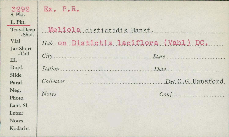 Meliola distictidis image