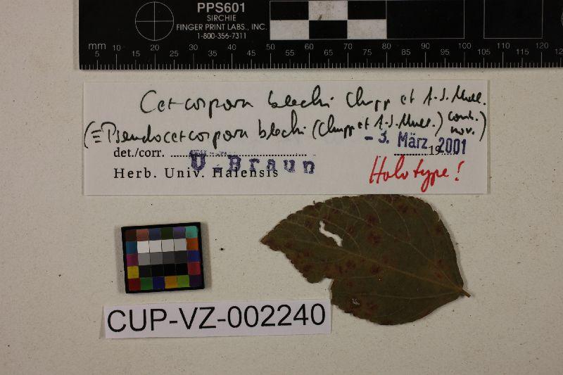 Pseudocercospora blechi image