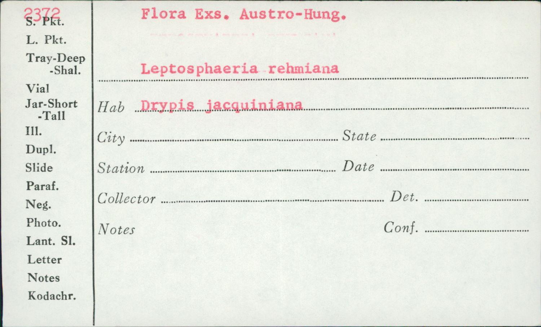 Leptosphaeria rehmiana image