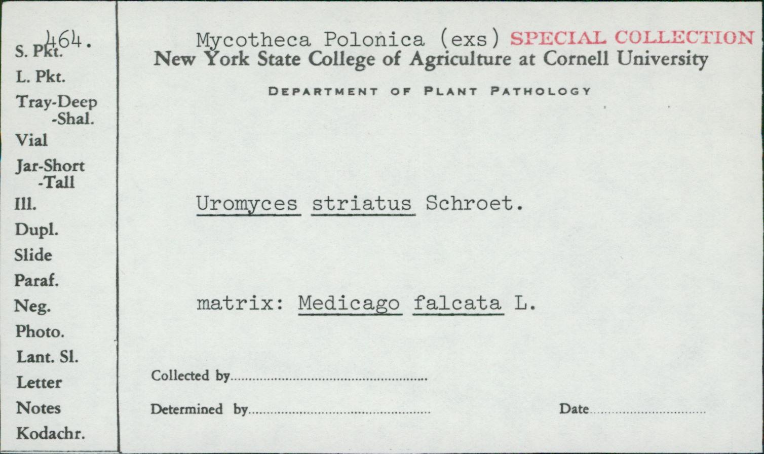 Uromyces striatus image