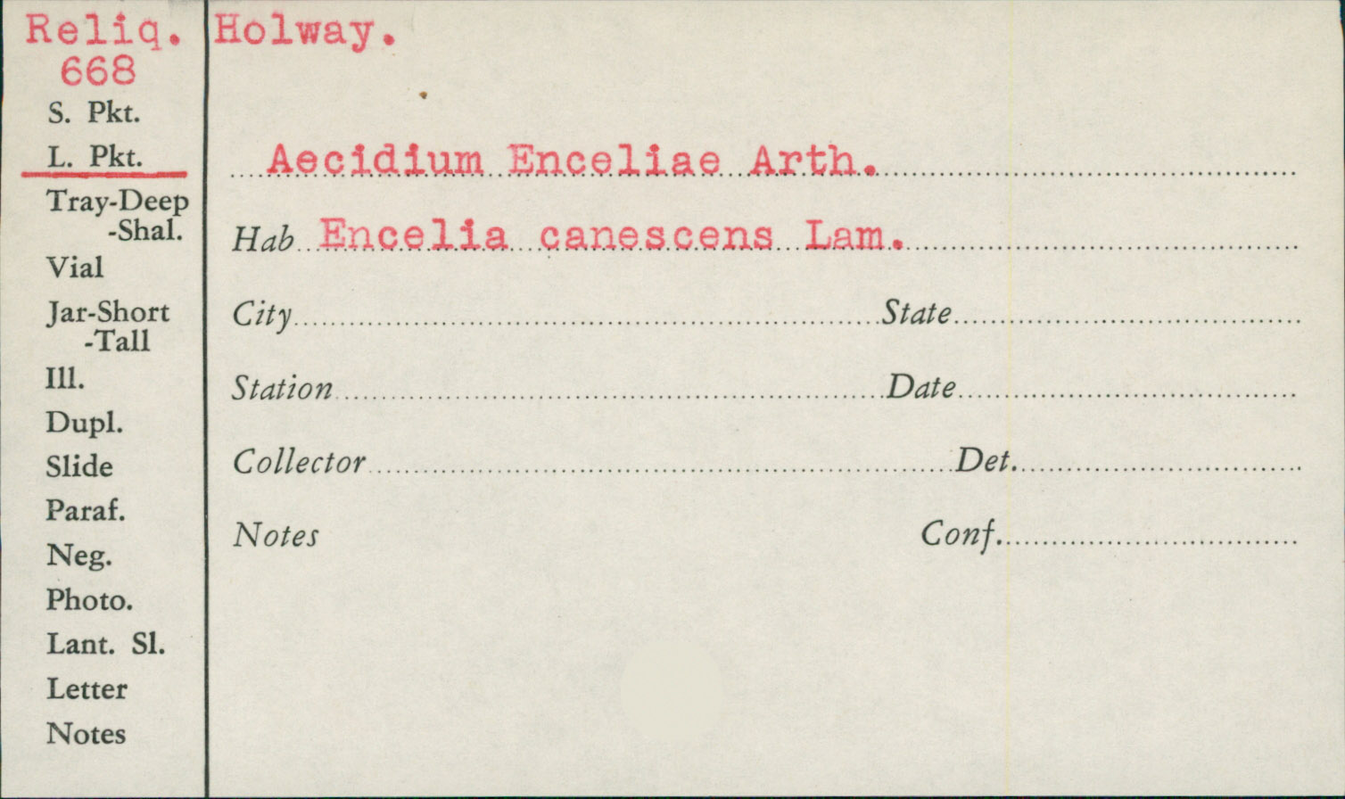 Aecidium enceliae image
