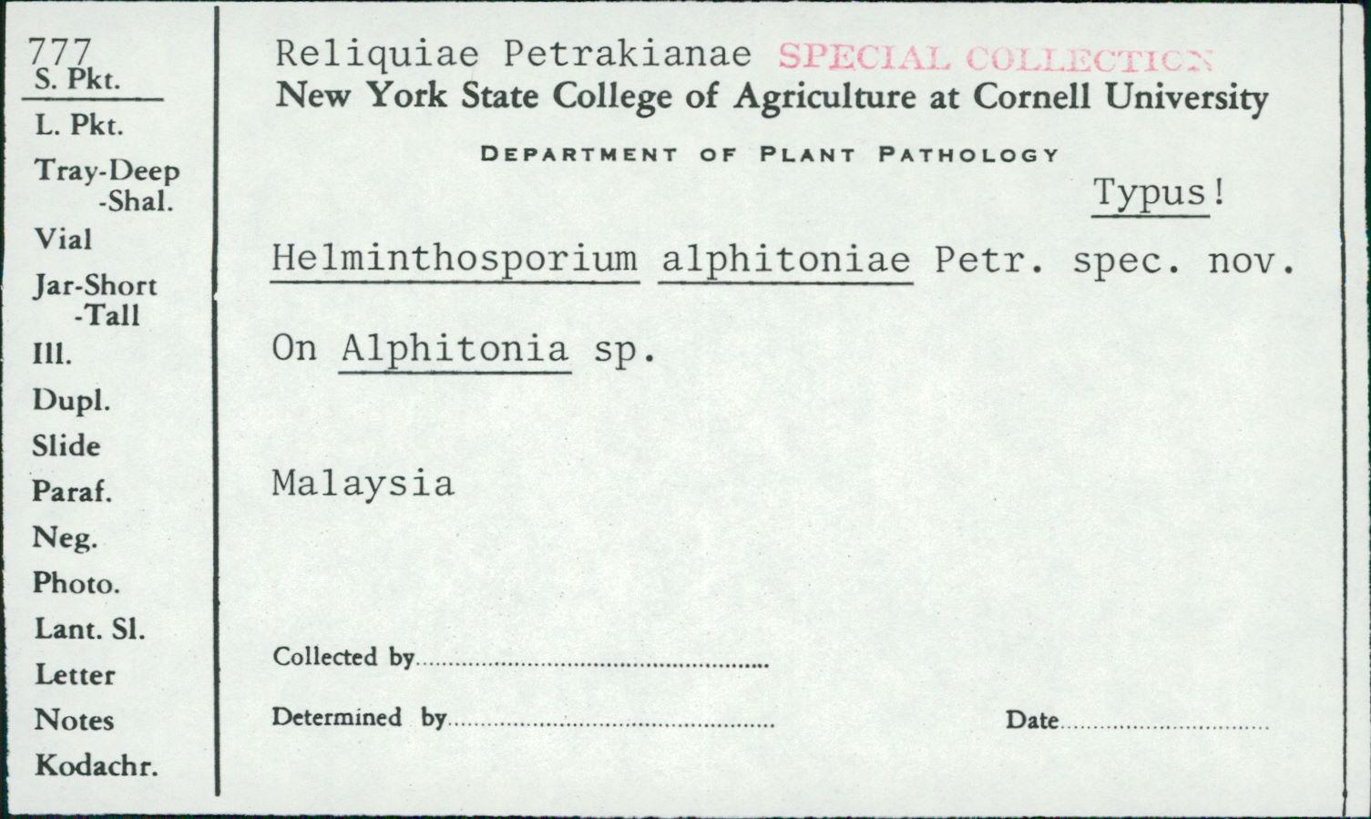 Helminthosporium alphitoniae image