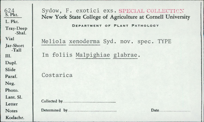 Meliola xenoderma image