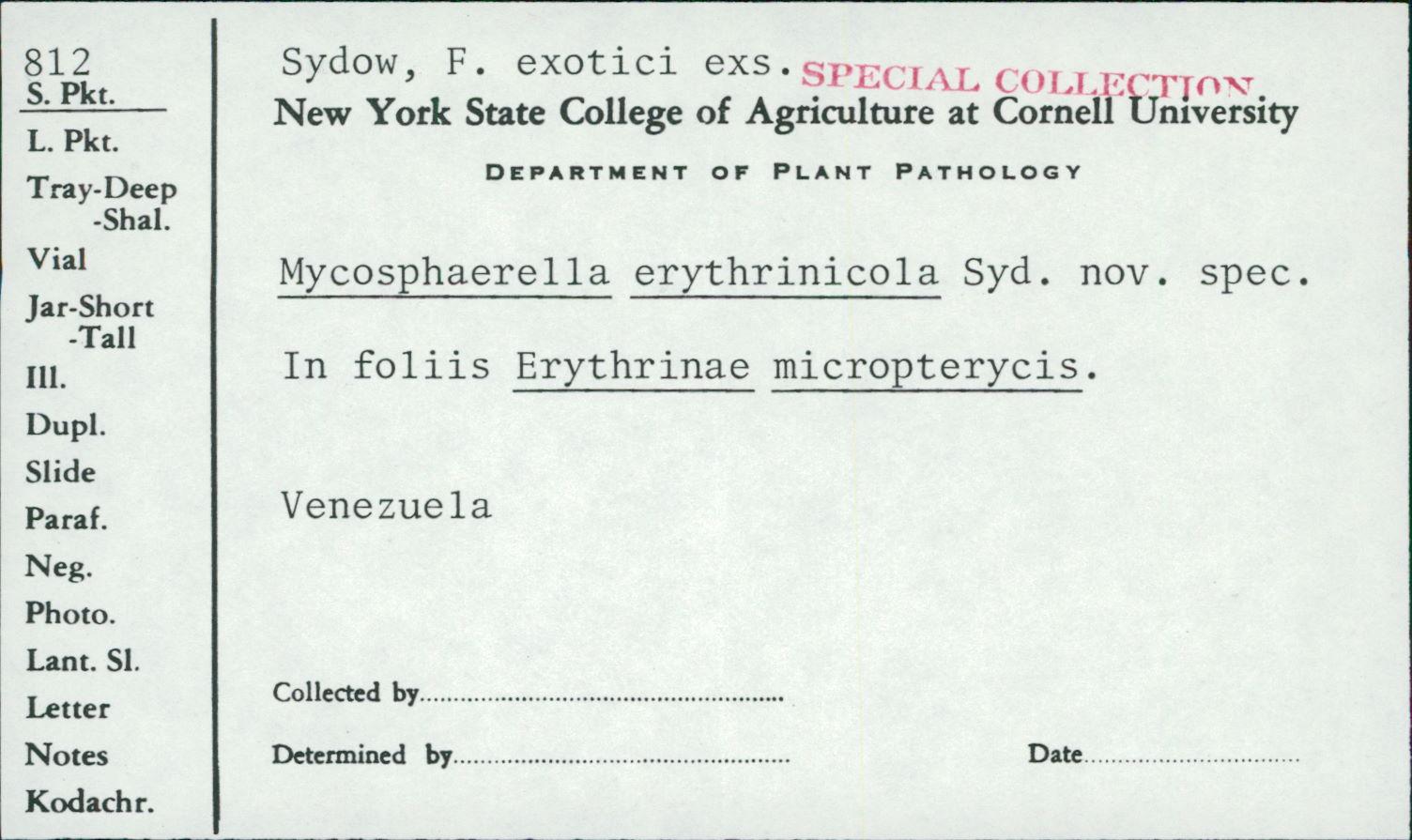 Mycosphaerella erythrinicola image
