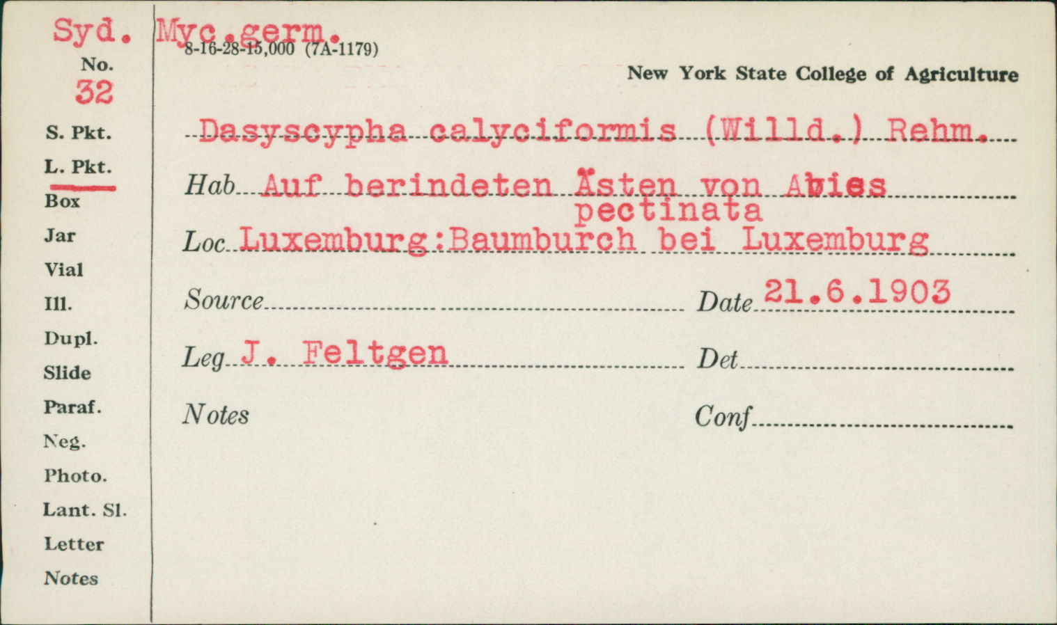 Dasyscypha calycioides image