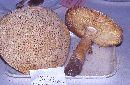 Amanita armillariiformis image