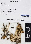 Coprinopsis cinerea image