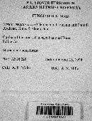 Hymenopellis megalospora image