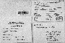 Multiclavula mucida image