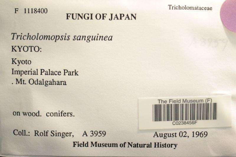 Tricholomopsis sanguinea image