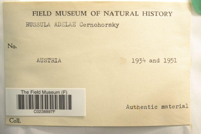 Russula adelae image