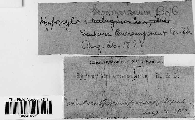 Hypoxylon broomeianum image