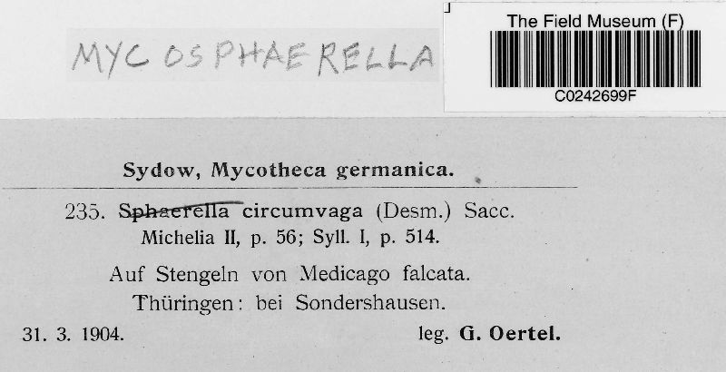 Mycosphaerella circumvaga image