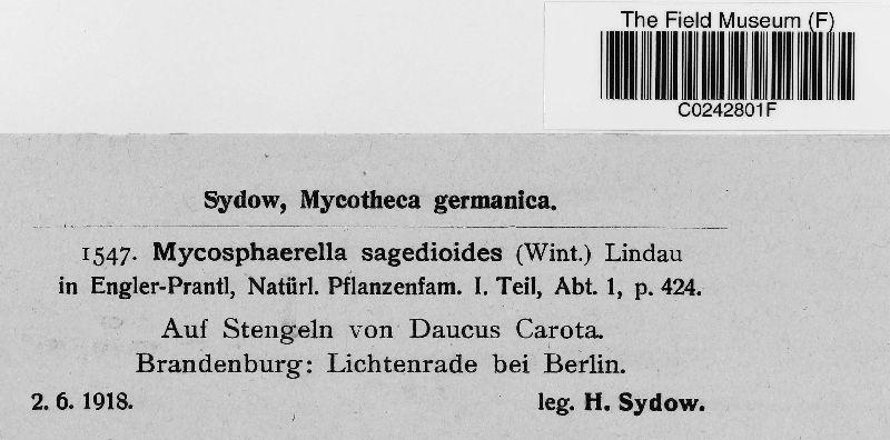 Mycosphaerella sagedioides image