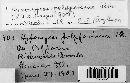 Hypomyces polyporinus image