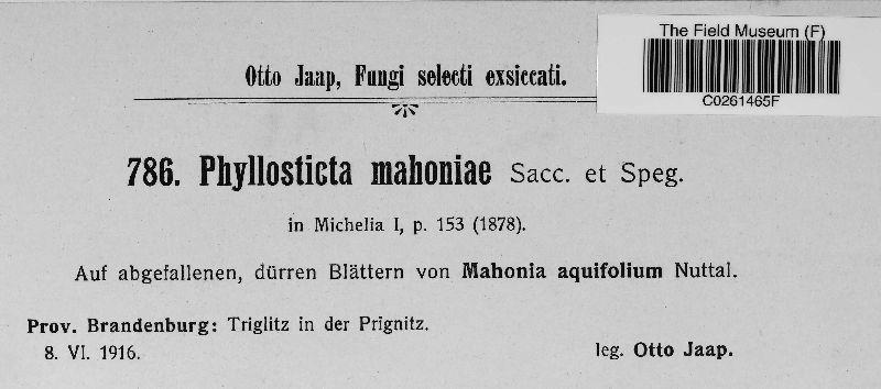 Phyllosticta mahoniae image