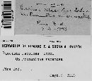 Image of Puccinia abnormis