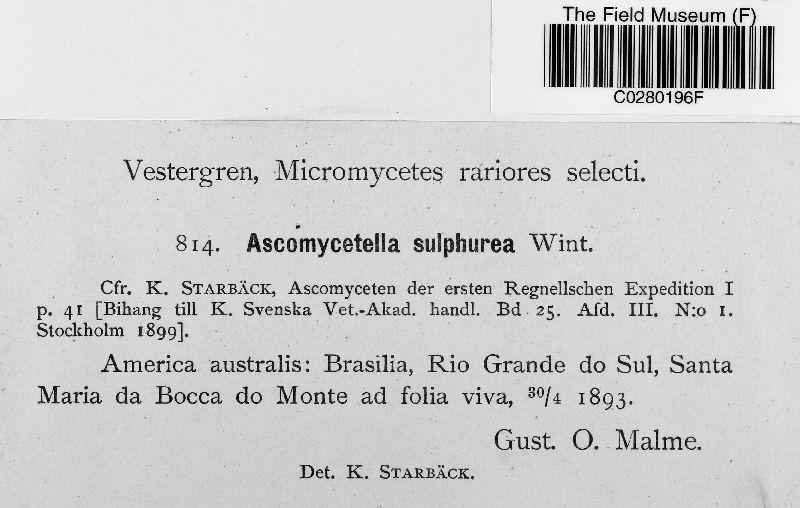 Myriangiopsis sulphurea image