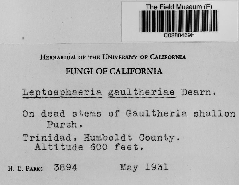 Leptosphaeria gaultheriae image